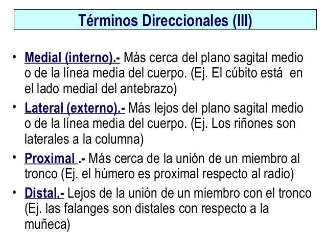 Tema 1 anatomía-cfpsa-10-11