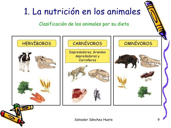 dibujos para colorear de los animales segun su