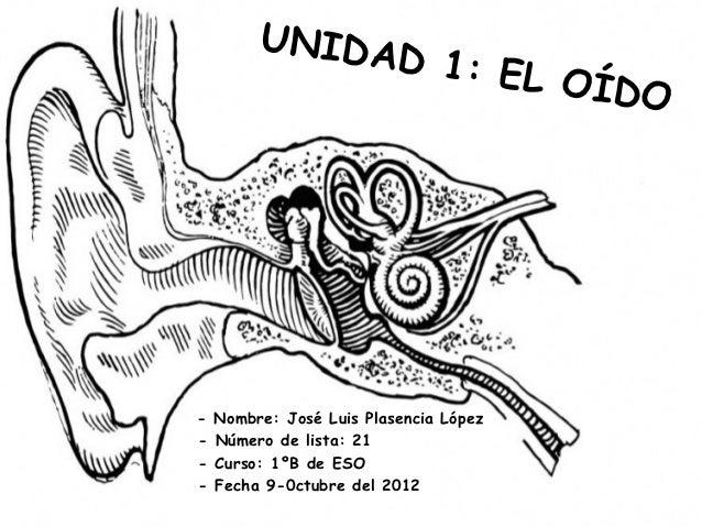 UNIDA              D                1: EL O                                       ÍD O-   Nombre: José Luis Plasencia Lópe...