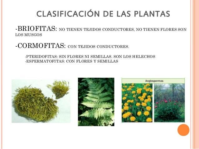 Tema 10 1 - Cuales son las plantas con flores ...