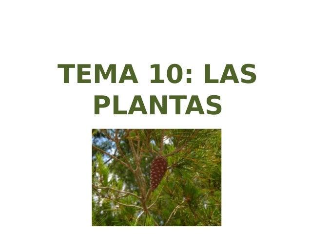 TEMA 10: LAS PLANTAS