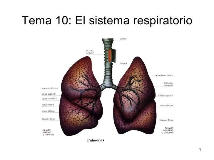 Tema 10: El sistema respiratorio