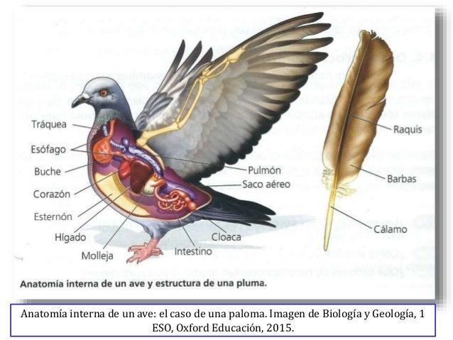 Tema10 vertebrados