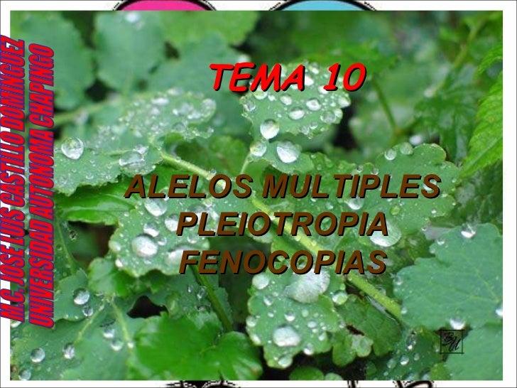 TEMA 10 ALELOS MULTIPLES PLEIOTROPIA FENOCOPIAS M.C. JOSE LUIS CASTILLO DOMINGUEZ UNIVERSIDAD AUTONOMA CHAPINGO