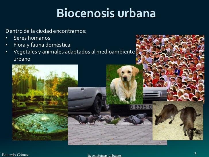 Tema 10 ecosistemas urbanos for Tipos de mobiliario urbano pdf