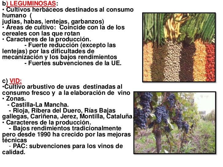 b) LEGUMINOSAS:• Cultivos herbáceos destinados al consumohumano (judías, habas, lentejas, garbanzos)• Áreas de cultivo: Co...