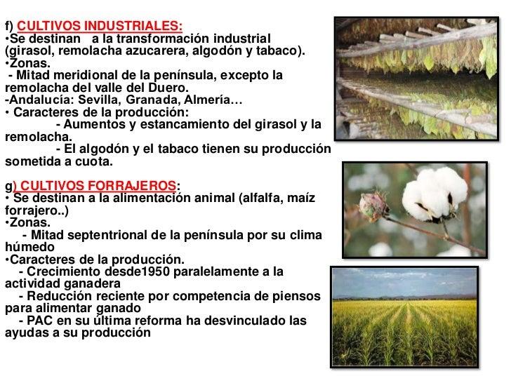 f) CULTIVOS INDUSTRIALES:•Se destinan a la transformación industrial(girasol, remolacha azucarera, algodón y tabaco).•Zona...