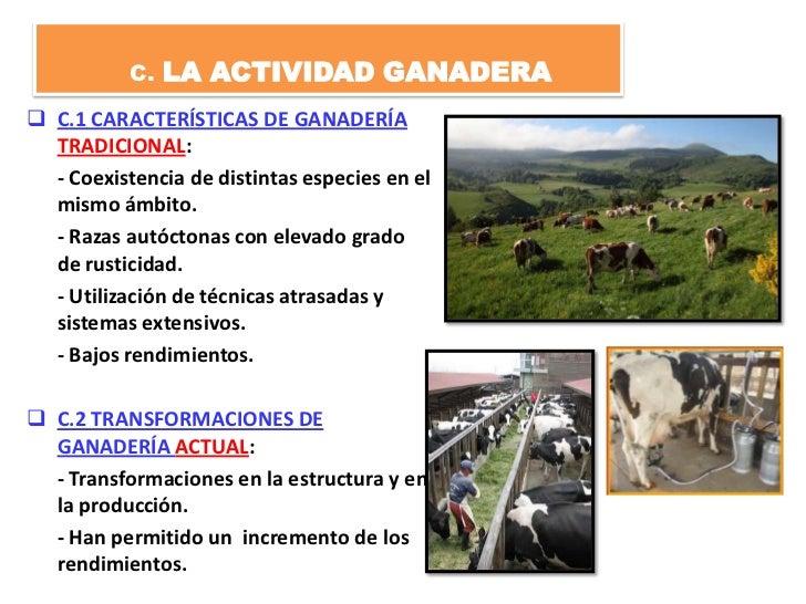 C. LA ACTIVIDAD GANADERA C.1 CARACTERÍSTICAS DE GANADERÍA  TRADICIONAL:  - Coexistencia de distintas especies en el  mism...