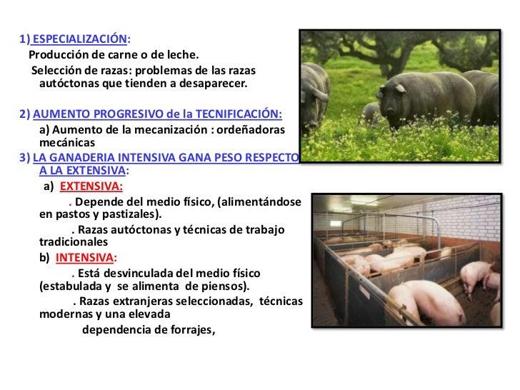 1) ESPECIALIZACIÓN:  Producción de carne o de leche.  Selección de razas: problemas de las razas    autóctonas que tienden...