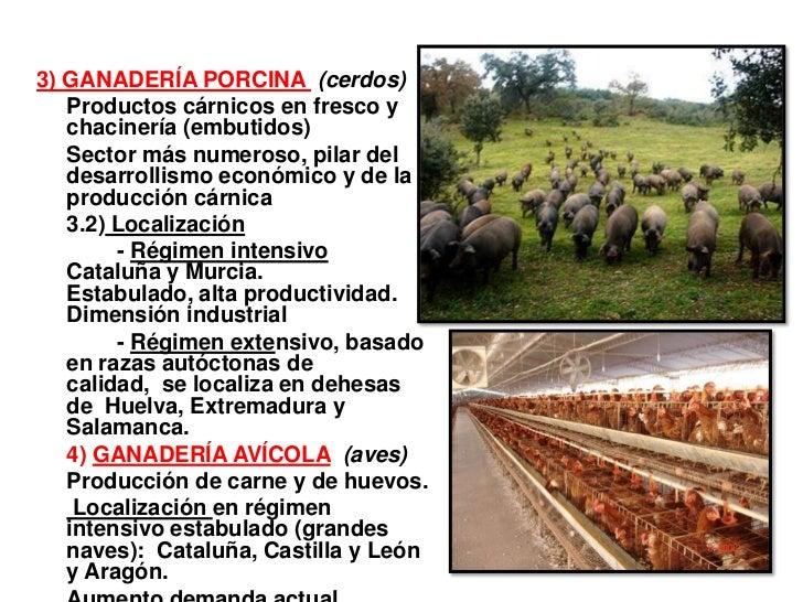 3) GANADERÍA PORCINA (cerdos)   Productos cárnicos en fresco y   chacinería (embutidos)   Sector más numeroso, pilar del  ...