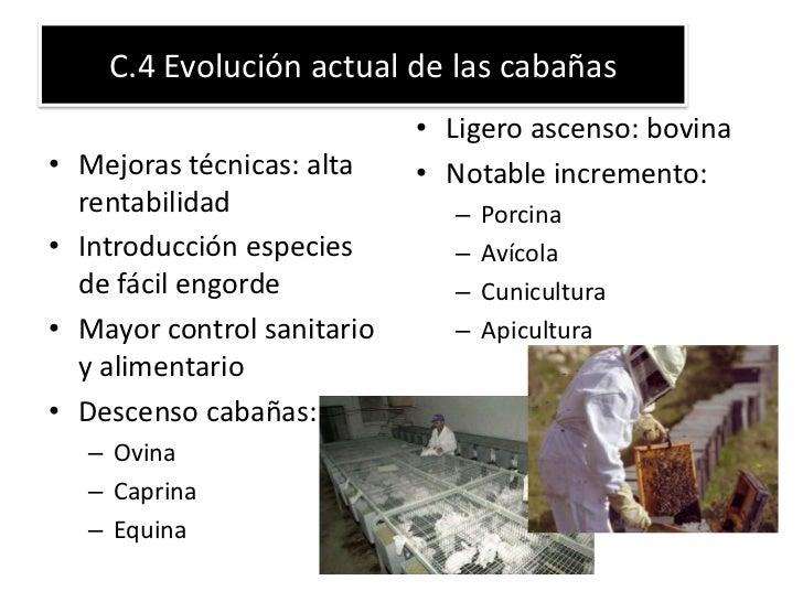 C.4 Evolución actual de las cabañas                            • Ligero ascenso: bovina• Mejoras técnicas: alta    • Notab...