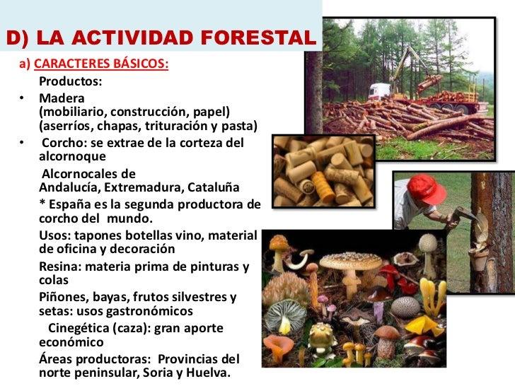 D) LA ACTIVIDAD FORESTAL a) CARACTERES BÁSICOS:     Productos: • Madera     (mobiliario, construcción, papel)     (aserrío...