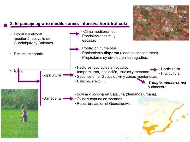 3. El paisaje agrario mediterráneo: intensiva hortofrutícola                                     • Clima mediterráneo:• Li...