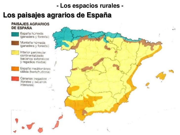 - Los espacios rurales -Los paisajes agrarios de España