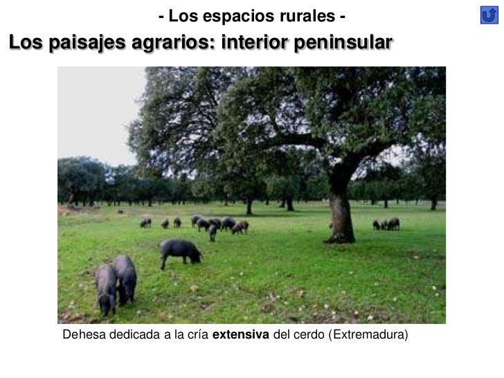 - Los espacios rurales -Los paisajes agrarios: interior peninsular     Dehesa dedicada a la cría extensiva del cerdo (Extr...