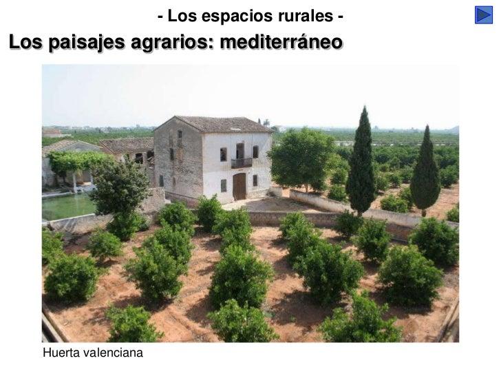 - Los espacios rurales -Los paisajes agrarios: mediterráneo   Huerta valenciana