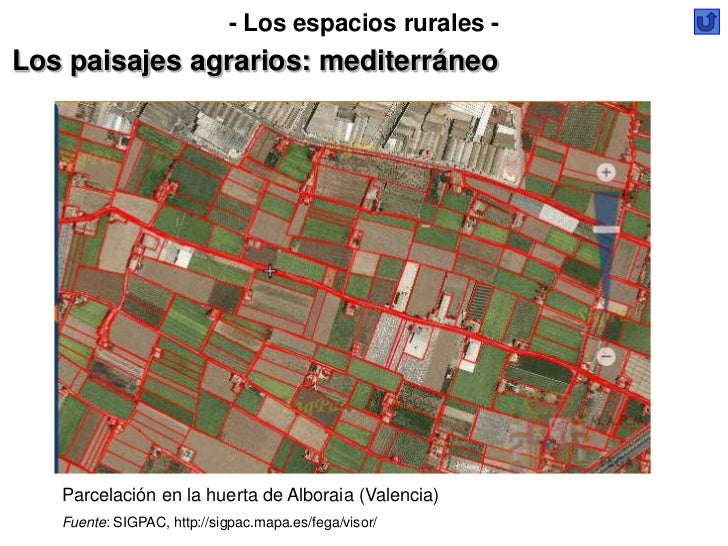 - Los espacios rurales -Los paisajes agrarios: mediterráneo   Parcelación en la huerta de Alboraia (Valencia)   Fuente: SI...