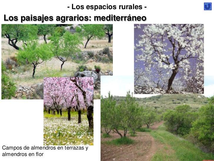 - Los espacios rurales -Los paisajes agrarios: mediterráneoCampos de almendros en terrazas yalmendros en flor