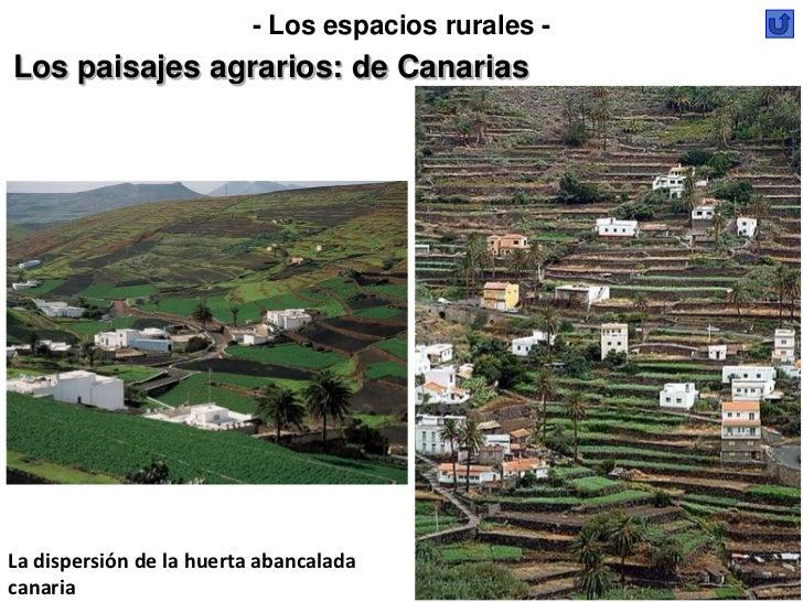 - Los espacios rurales -Los paisajes agrarios: de CanariasLa dispersión de la huerta abancaladacanaria