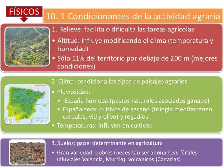 FÍSICOS 10. 1 Condicionantes de la actividad agraria          1. Relieve: facilita o dificulta las tareas agrícolas       ...