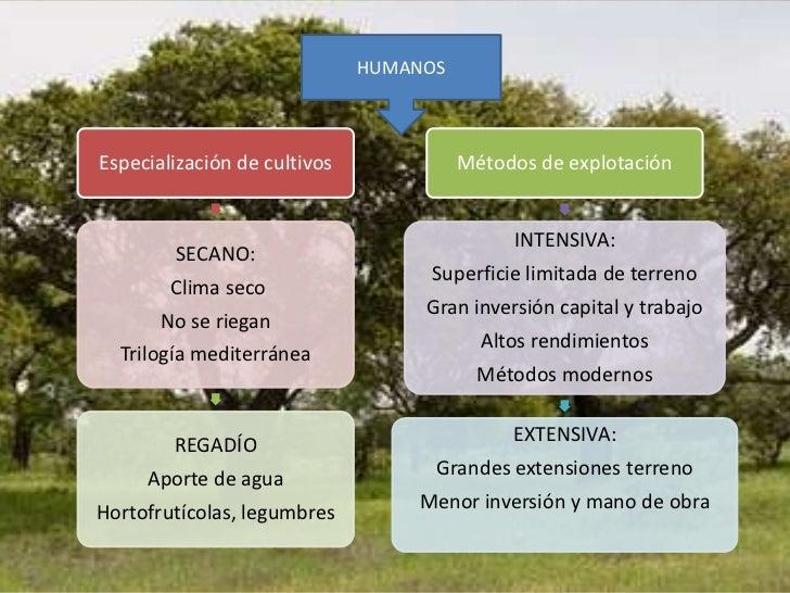 HUMANOSEspecialización de cultivos             Métodos de explotación                                             INTENSIV...