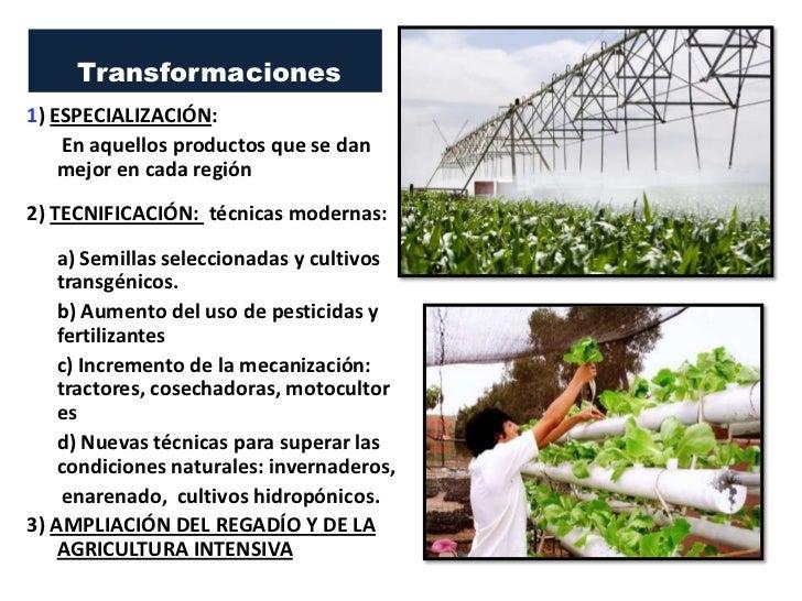 Transformaciones1) ESPECIALIZACIÓN:    En aquellos productos que se dan    mejor en cada región2) TECNIFICACIÓN: técnicas ...