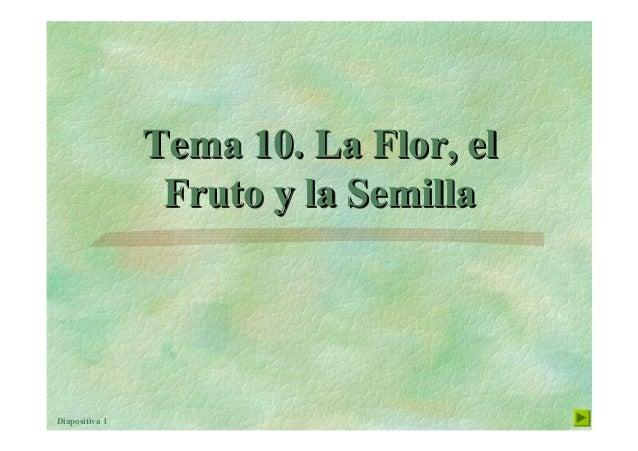 Diapositiva 1 Tema 10. La Flor, el Fruto y la Semilla Tema 10. La Flor, elTema 10. La Flor, el Fruto y la SemillaFruto y l...