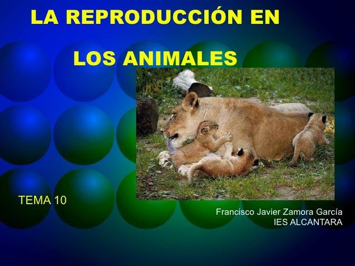 LA REPRODUCCIÓN EN LOS ANIMALES TEMA 10 Francisco Javier Zamora García IES ALCANTARA