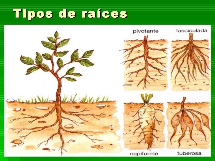 Tema 10 Las Plantas