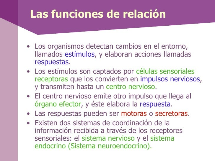 Anatomía y Fisiología del Sistema Nervioso