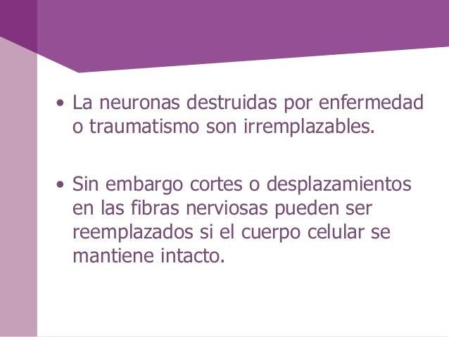 • La neuronas destruidas por enfermedado traumatismo son irremplazables.• Sin embargo cortes o desplazamientosen las fibra...