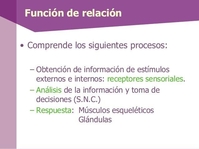 Función de relación• Comprende los siguientes procesos:– Obtención de información de estímulosexternos e internos: recepto...