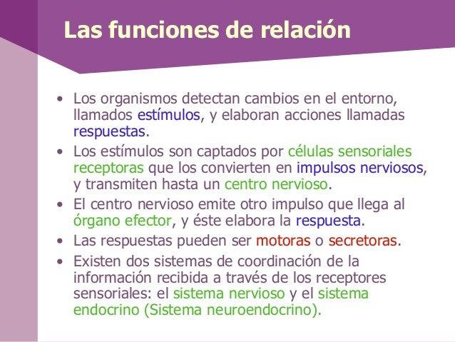 Las funciones de relación• Los organismos detectan cambios en el entorno,llamados estímulos, y elaboran acciones llamadasr...