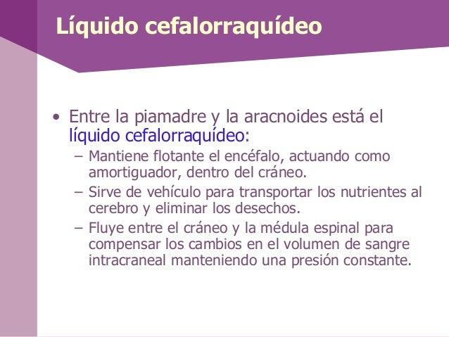 Líquido cefalorraquídeo• Entre la piamadre y la aracnoides está ellíquido cefalorraquídeo:– Mantiene flotante el encéfalo,...