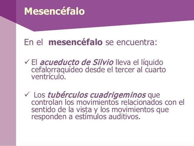CerebeloPartes: Vermis Lobulos cerebelososFunción:Se encarga delcontrol de la motricidady está relacionado conciertas fu...