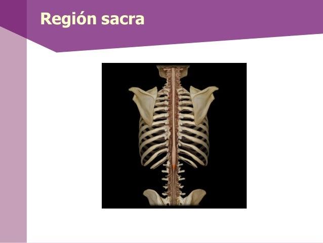 Sistema nervioso autónomo• El sistema nervioso autónomo (vegetativo), adiferencia del sistema nervioso somático, recibe la...