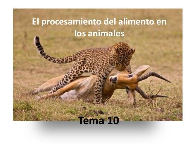El procesamiento del alimento en          los animales          Tema 10