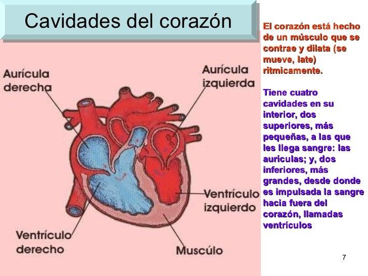 Famoso Diagrama De Corazón Sistema Circulatorio Colección - Anatomía ...