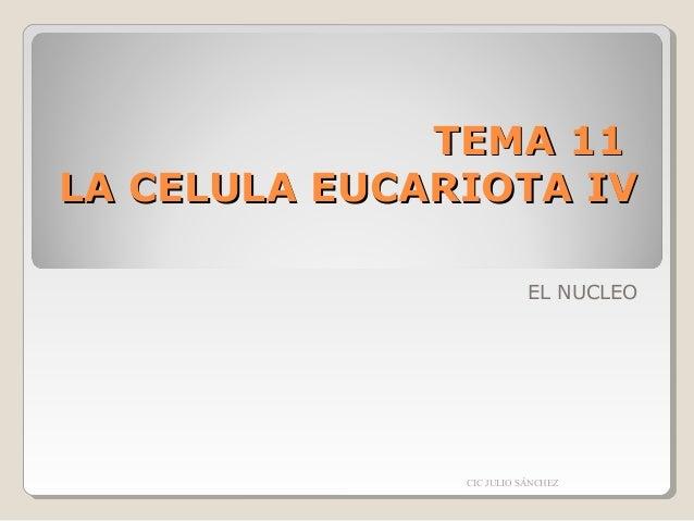 TEMA 11 LA CELULA EUCARIOTA IV EL NUCLEO  CIC JULIO SÁNCHEZ