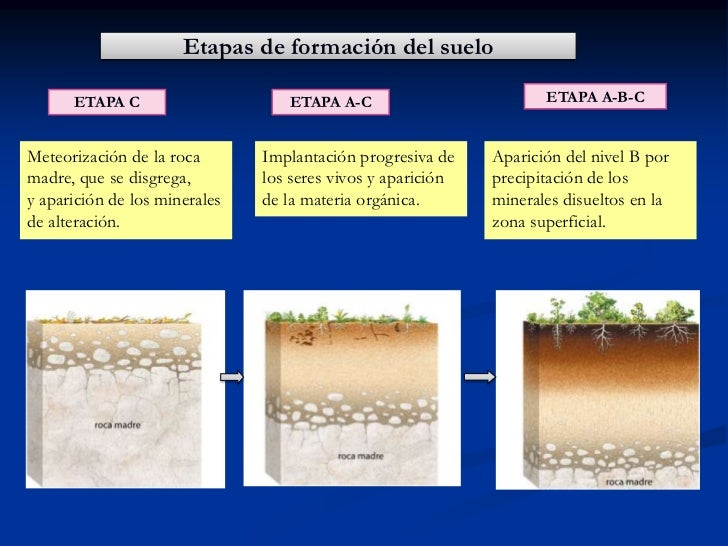 Tema11 el suelo propiedades 1 for Formacion de los suelos