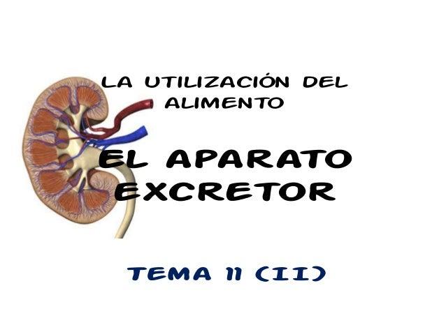 La utilización del    alimentoEl aparato excretor Tema 11 (II)