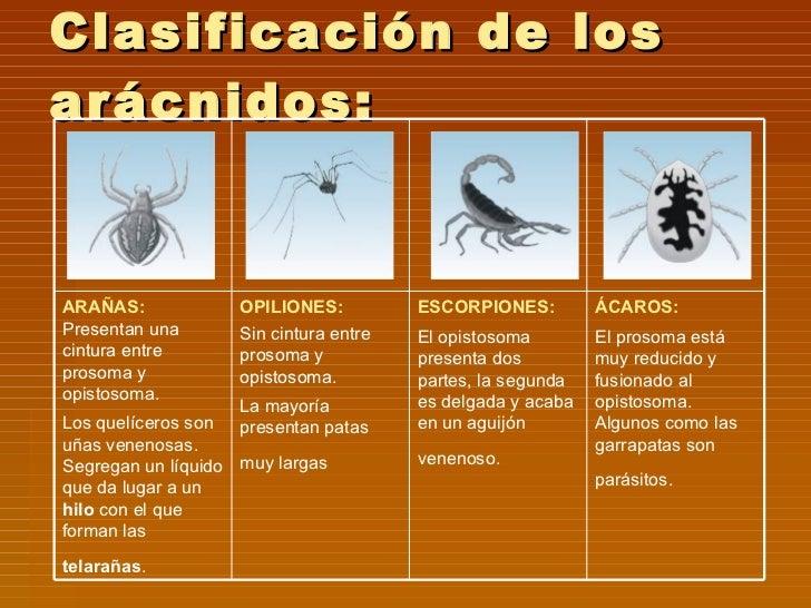 Las operaciones de la extracción de los parásitos del organismo