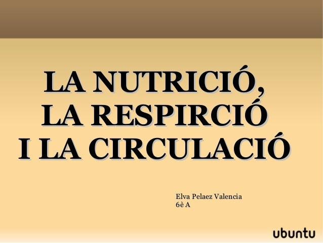 LA NUTRICIÓ,LA NUTRICIÓ, LA RESPIRCIÓLA RESPIRCIÓ I LA CIRCULACIÓI LA CIRCULACIÓ Elva Pelaez ValenciaElva Pelaez Valencia ...