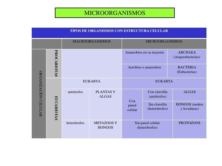 MICROORGANISMOS                                       TIPOS DE ORGANISMOS CON ESTRUCTURA CELULAR                          ...