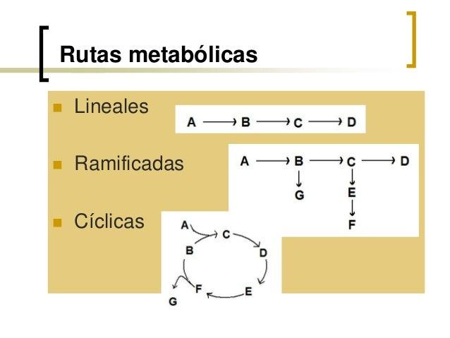 Tema 12. introducción metabolismo