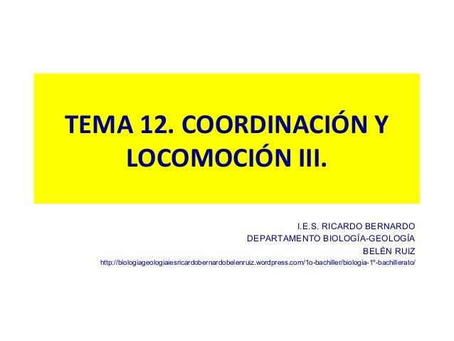 TEMA 12. COORDINACIÓN Y    LOCOMOCIÓN III.                                                          I.E.S. RICARDO BERNARD...