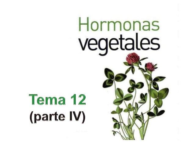 HORMONAS VEGETALESLas hormonas vegetales son sustancias sintetizadasen un determinado lugar de la planta y setransportan a...