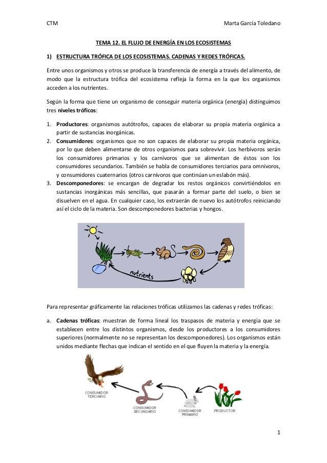CTM  Marta García Toledano TEMA 12. EL FLUJO DE ENERGÍA EN LOS ECOSISTEMAS  1) ESTRUCTURA TRÓFICA DE LOS ECOSISTEMAS. CADE...