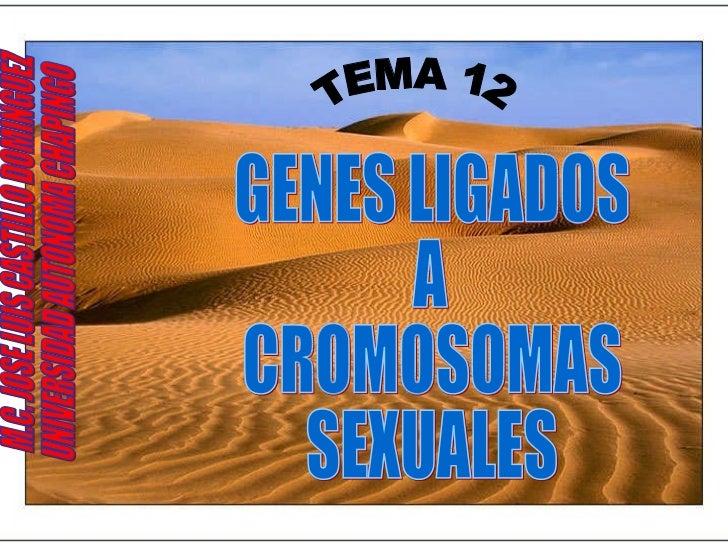 TEMA 12 GENES LIGADOS A CROMOSOMAS SEXUALES M.C. JOSE LUIS CASTILLO DOMINGUEZ UNIVERSIDAD AUTONOMA CHAPINGO