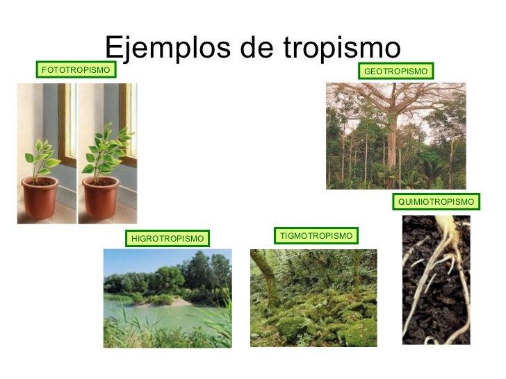 Que es fototropismo y ejemplos 9